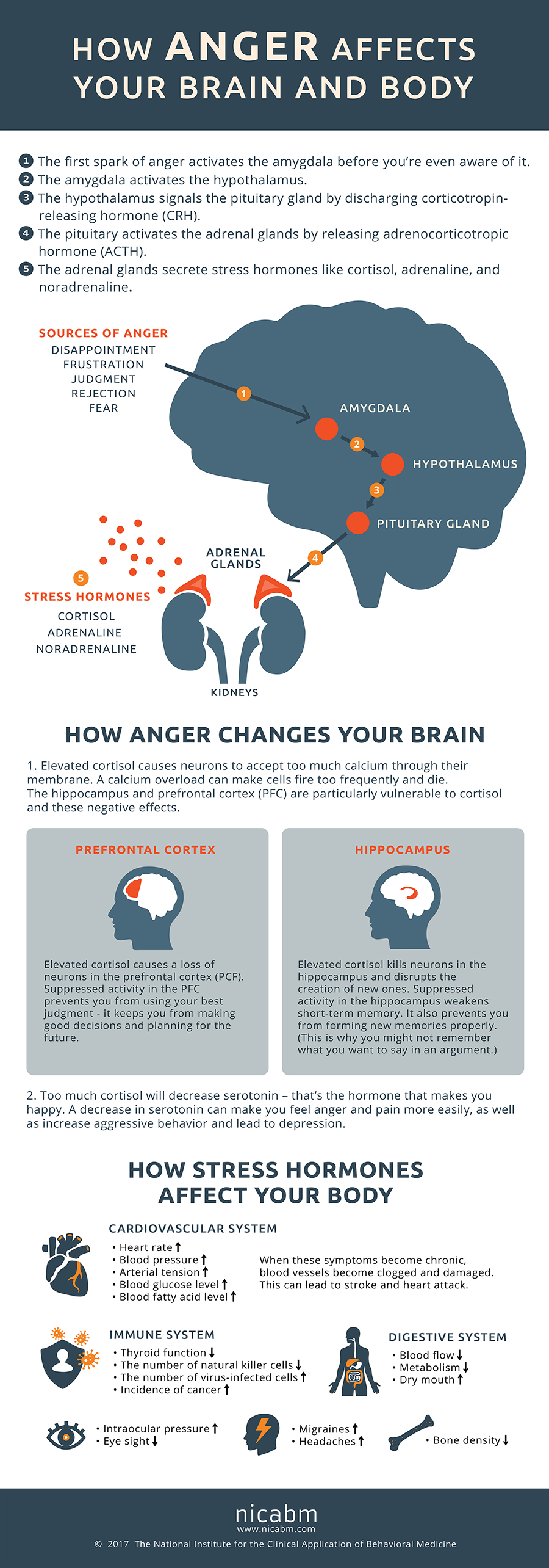 """""""How anger affects your brain and body"""" Infographic"""