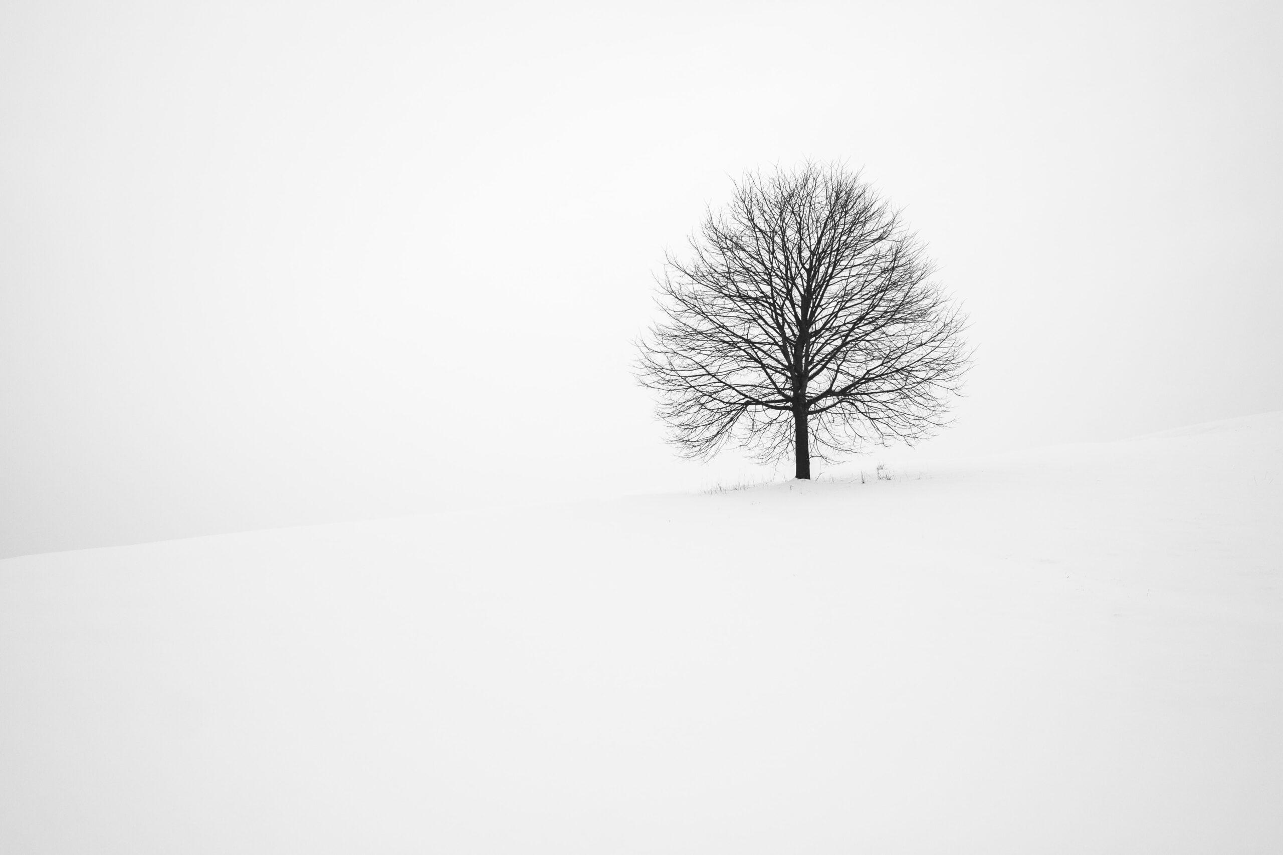Single, bare tree in vast expanse of white snow.